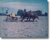 Art Bauer planting corn in 1946